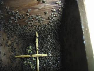 分蜂後約16週間(115日後)の巣箱の中の状態(1群目)