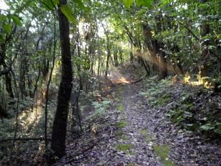 早朝の吉備の中山の木漏れ日