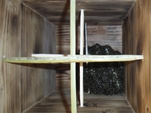 捕獲後3週間の日本ミツバチの巣