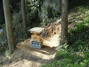 2群目の日本ミツバチ