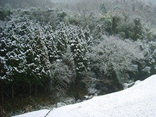 日曜日の雪景色